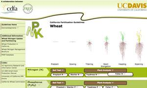 California Fertilizer Guideline for Wheat