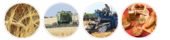 UC Small Grains Research and Information